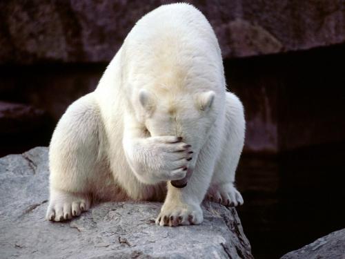 polar-bear-oh-nothumbnail